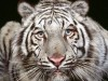 Animal 246891 Wallpaper wallpaper
