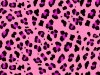 Anime Animal Print Best Hd 199953 Wallpaper wallpaper