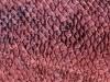 Animal Skin Pattern X 462067 Wallpaper wallpaper