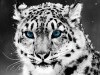 Animal Stunning 433593 Wallpaper wallpaper