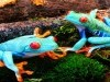Animal The Blue Frogs Resolution Free 209971 Wallpaper wallpaper