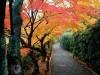 Boats Autumn Colors Kyoto Japan Colorful 406859 Wallpaper wallpaper