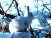 African Animals Of Free Rabbit Thousands 94063 Wallpaper wallpaper