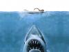 Shark Animal By Shenron Keywords Animals Sharks Woman Swimming 778332 Wallpaper wallpaper